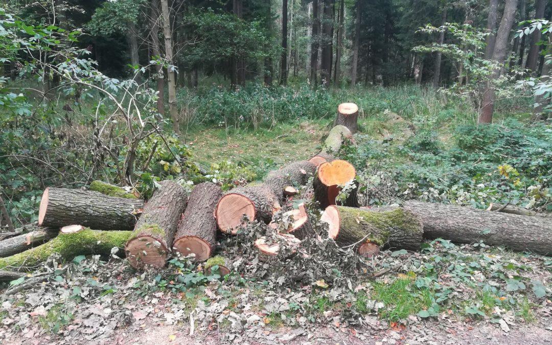 Umgestürzte Bäume bedrohen den Bahnverkehr (04.09.17)