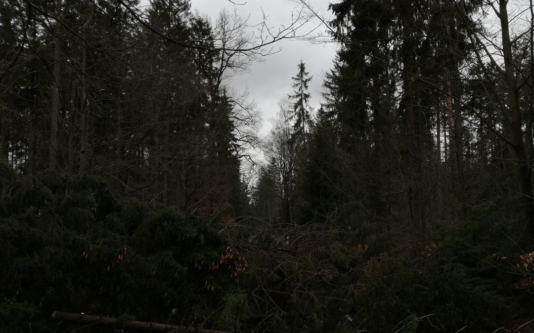 H1 Baum auf Straße 10.03.19